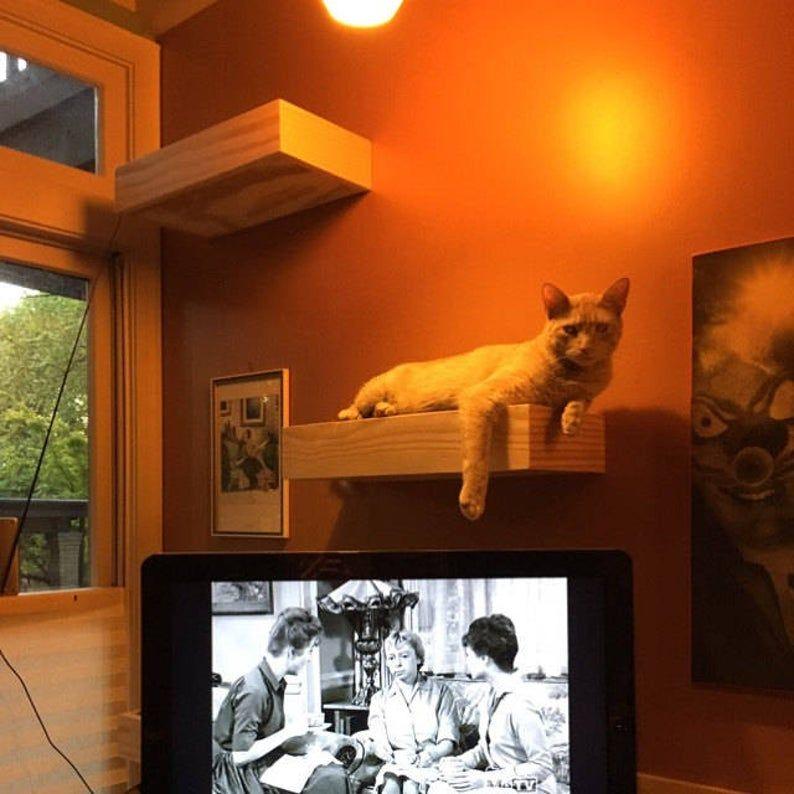 Cat shelf cat furniture cat shelf sitter cat bed cat cat