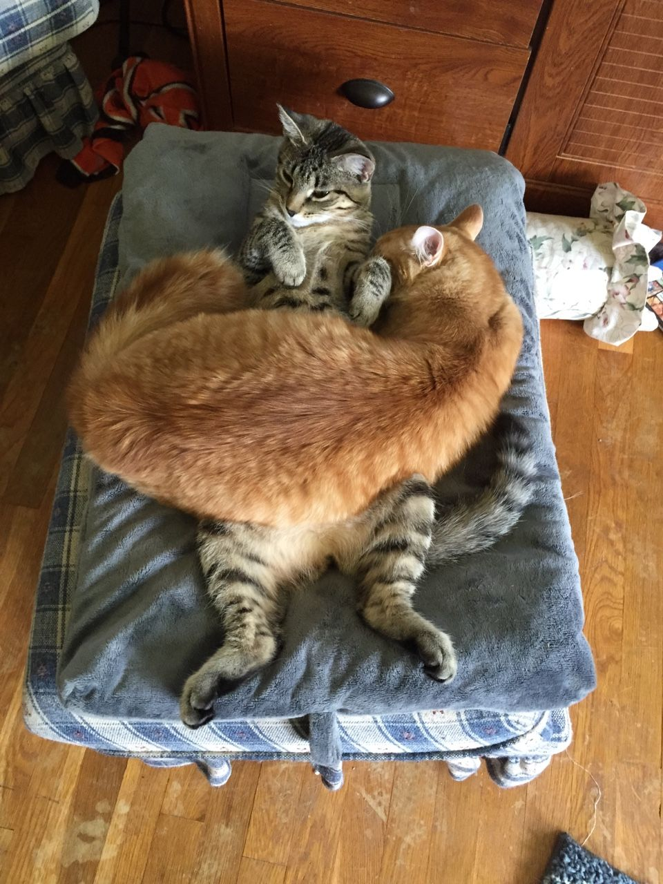 Themulder Oh My God Cute Cats Cat Sleeping Cats