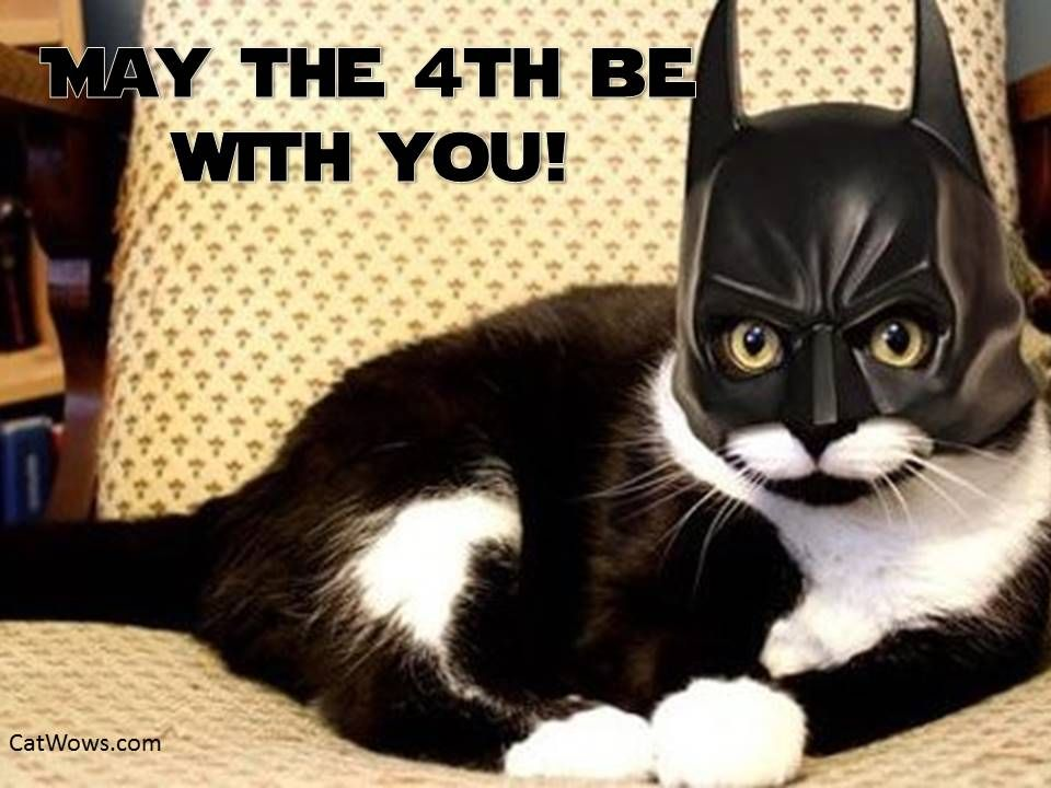May the 4th Be With You Cat Darth Vader for National Star