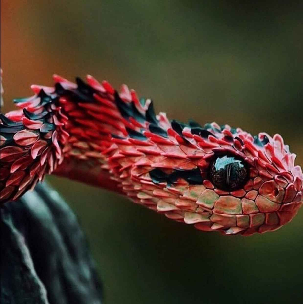 Weekly Inspiration 8 Viper Animal And Reptiles