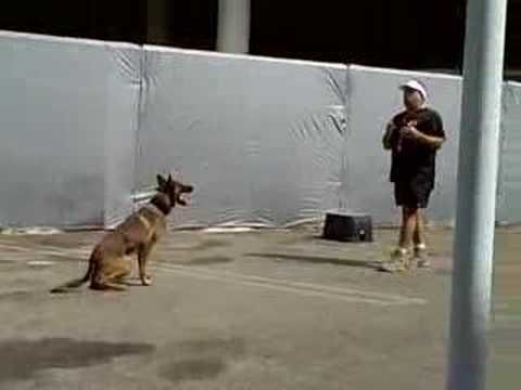Fred Hassen Of Sit Means Sit Dog Training Doing A Demo Dog