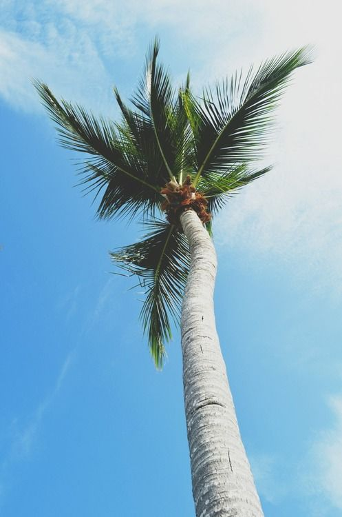 Palm Trees Tumblr Vertical | Desktop Backgrounds for Free ...