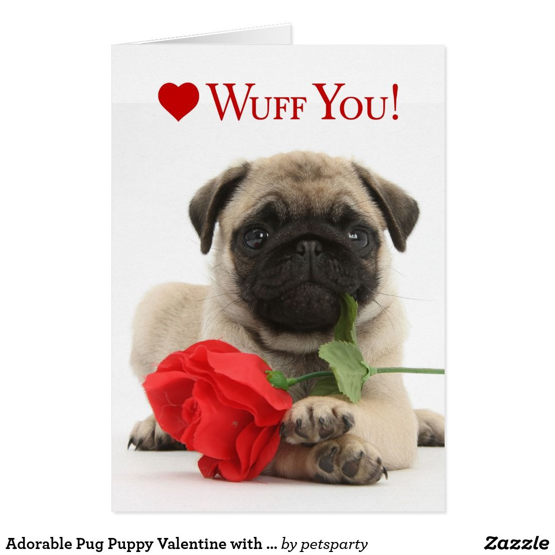 Adorable Pug Puppy Valentine With A Red Rose Holiday Card Zazzle