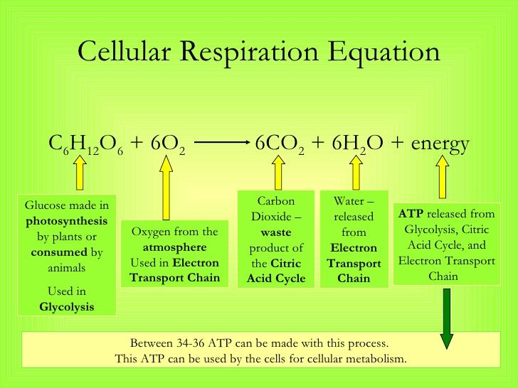 Photosynthesis Respiration Equation Stylized Google Search My