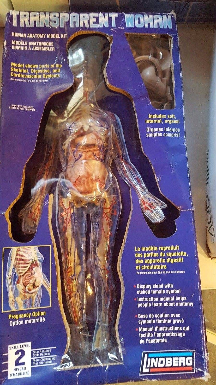 Cool Clear Girl Human Anatomy Mannequin Package Lindberg 76013
