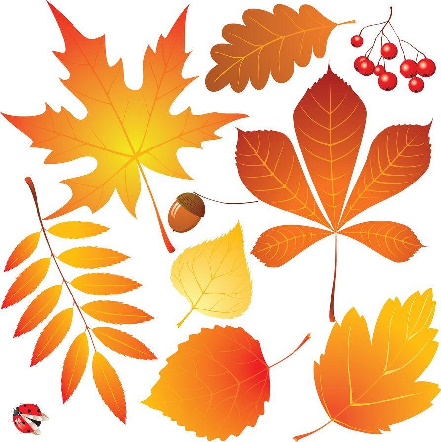Картинки с листьев, бодики