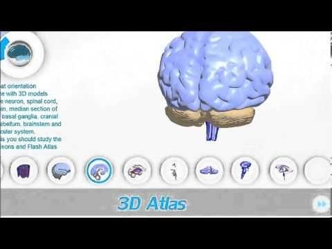 3d Brain Model Flash Brain Anatomy 3d Neuroanatomy Software