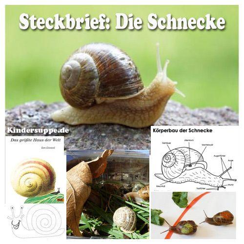 Steckbrief Schnecke Ideen Fur Kindergarten Und Kita Schnecken