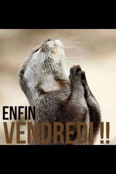 Encore une matin e demain et en weekend citations blague drole humour animaux et animaux dr les - Animaux humoristiques ...