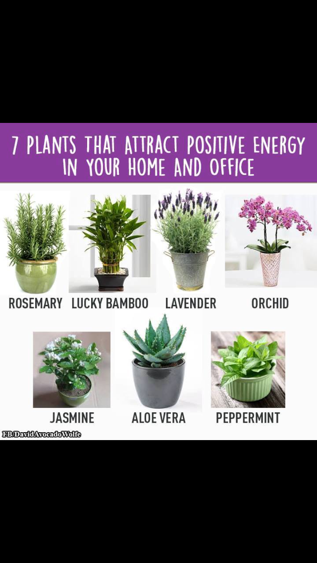 7 plants to attract positive energy in your home or office