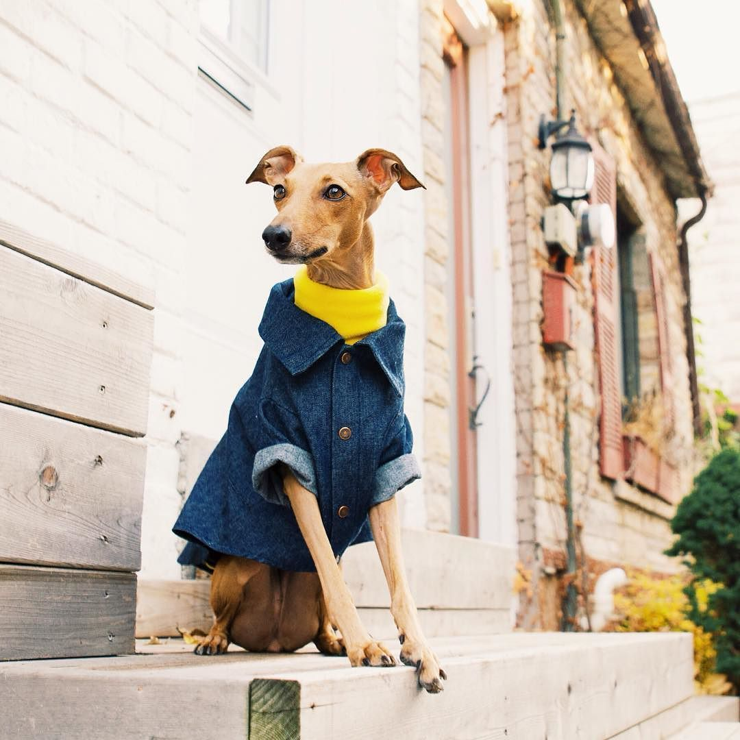 This has to be one of my fav looks right now! A bright turtleneck under a denim shirt is perfect combination of preppy and polished with a hint of fun. Just like me! #iggyjoey