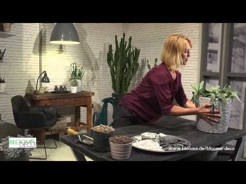 bloom 39 s tv blumige geschenkideen im becher youtube dekoration pinterest kranz diy. Black Bedroom Furniture Sets. Home Design Ideas
