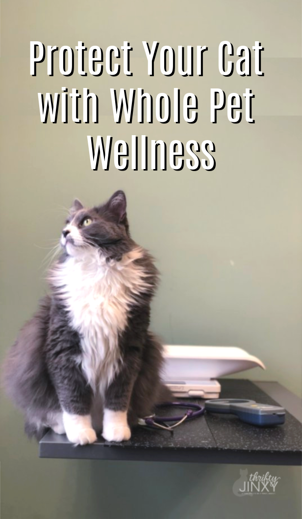 Get A Whole Pet With Wellness Quote From Nationwide Pet For Your Cat For Your Chance To Win The Ultimate Zoo Experience Sweepstakes Ad Pet Wellness Pets Cats