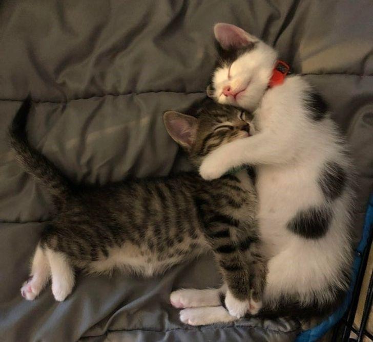 Snooze Away With Sleepy Wholesome Animals