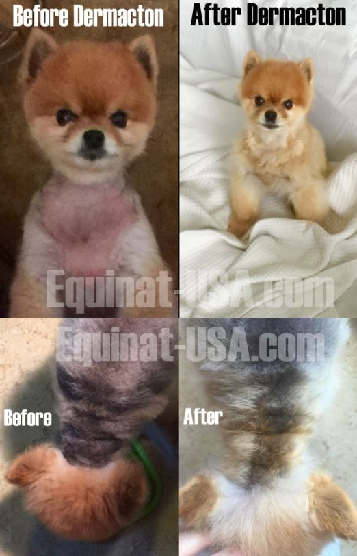 Treating A Pomeranian With Black Skin Disease Me My Dog