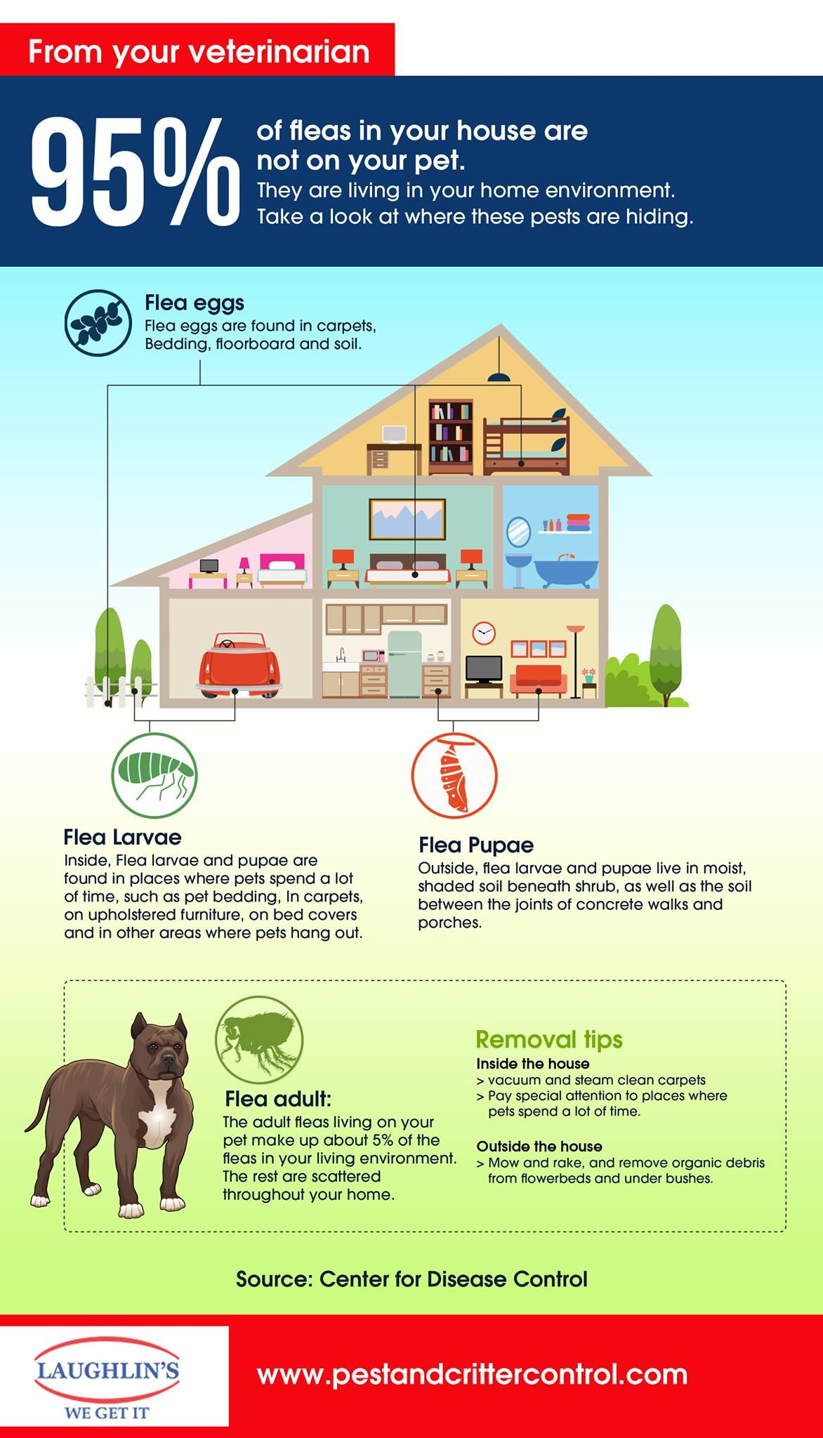 90ba3d7dc9a4ba0aeb4a841b54594e26 - How To Get Rid Of Fleas Organically In Your House