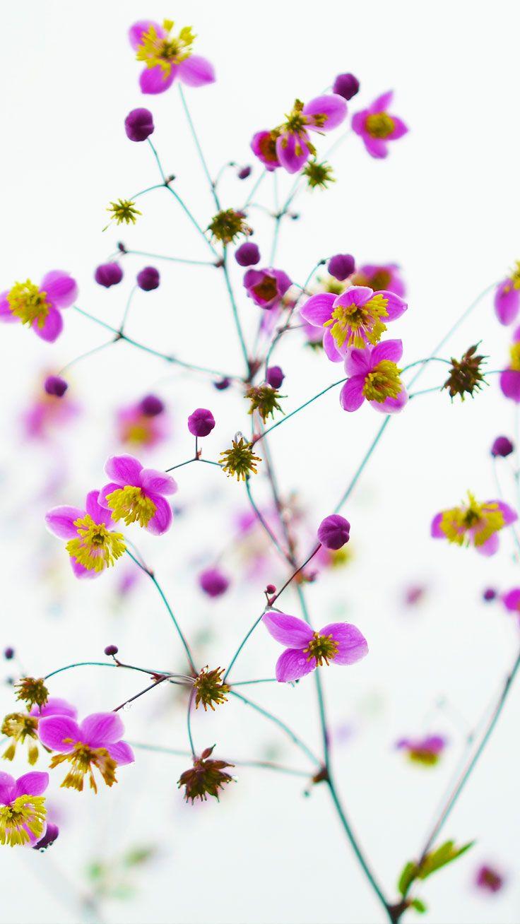 Wallpaper download pinterest - Preppy Original Iphone Wallpaper Wild Flowers