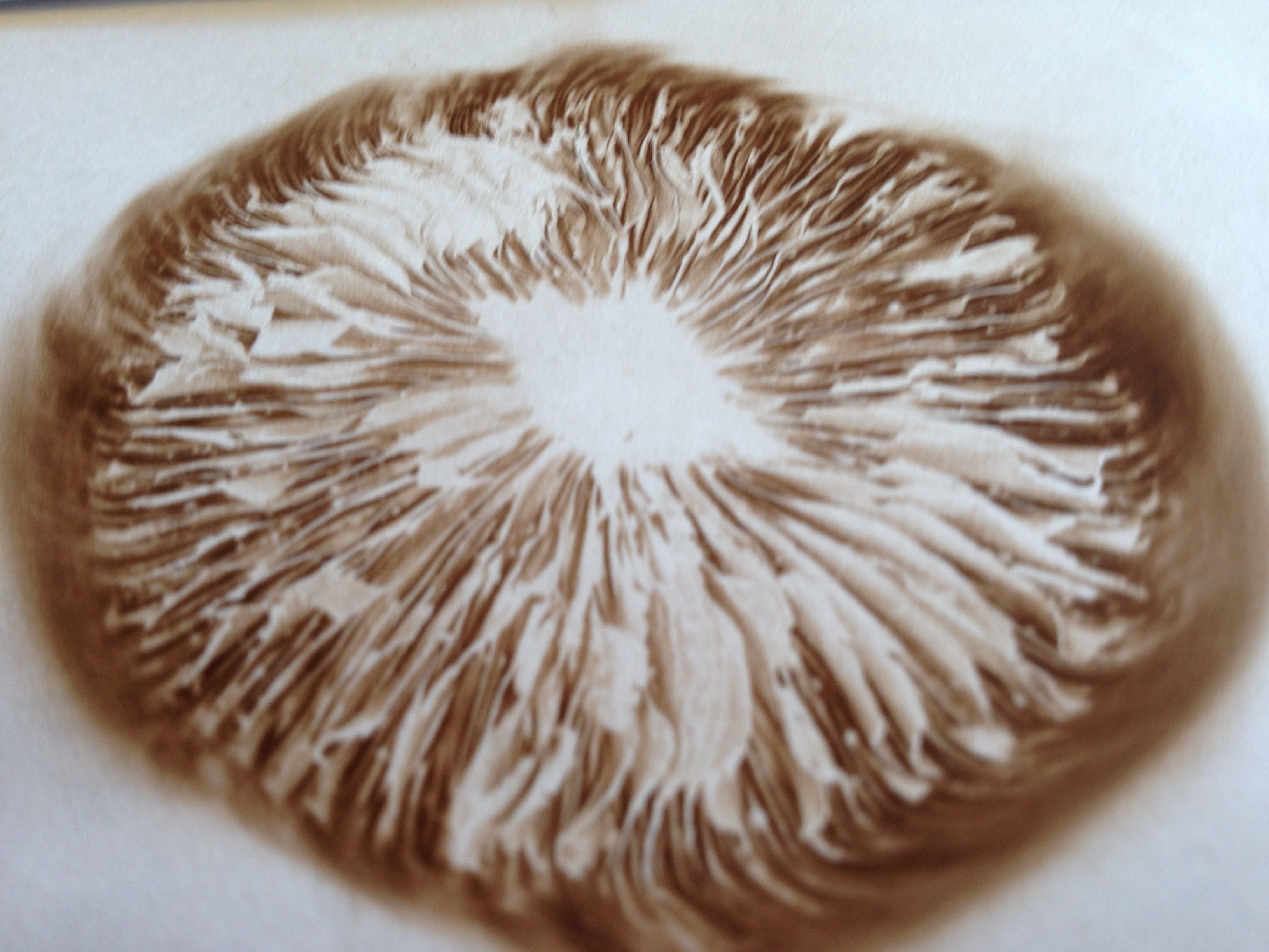 Make A Mushroom Spore Print Wikihow To Make Crafts Pinterest