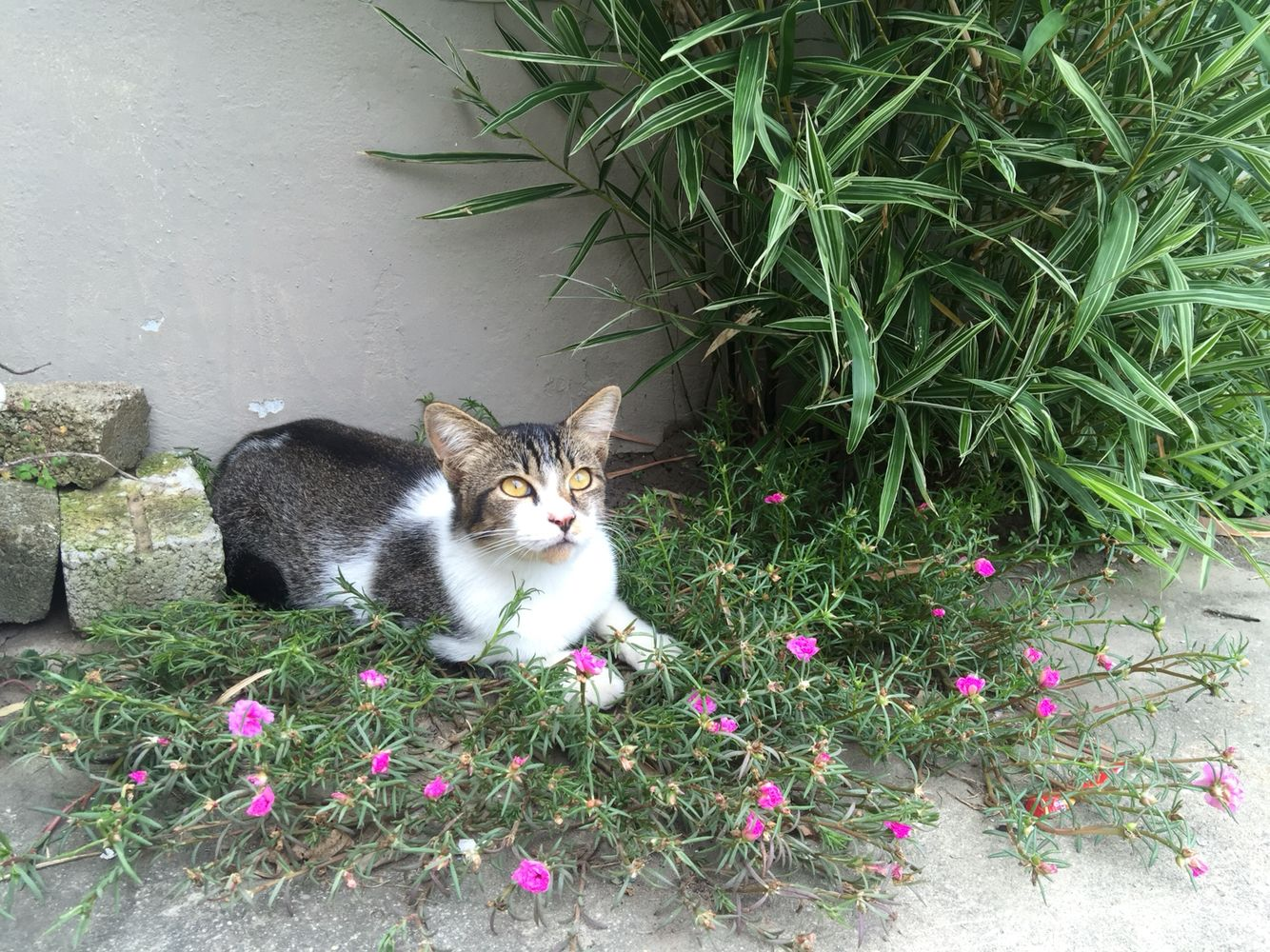 Pin by lily on cat pinterest cat flowers cats blossoms kitty cats gatos cats and kittens bloemen flower cat izmirmasajfo