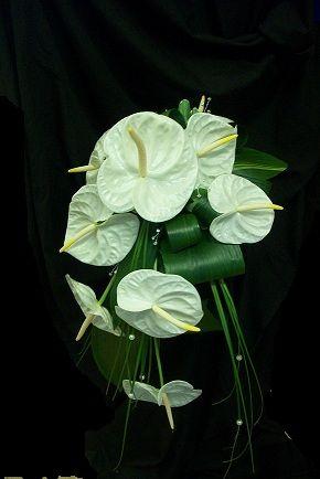 White Anthurium Bridal Bouquet Bridal Flowers Tropical Flowers Bouquet Church Flowers