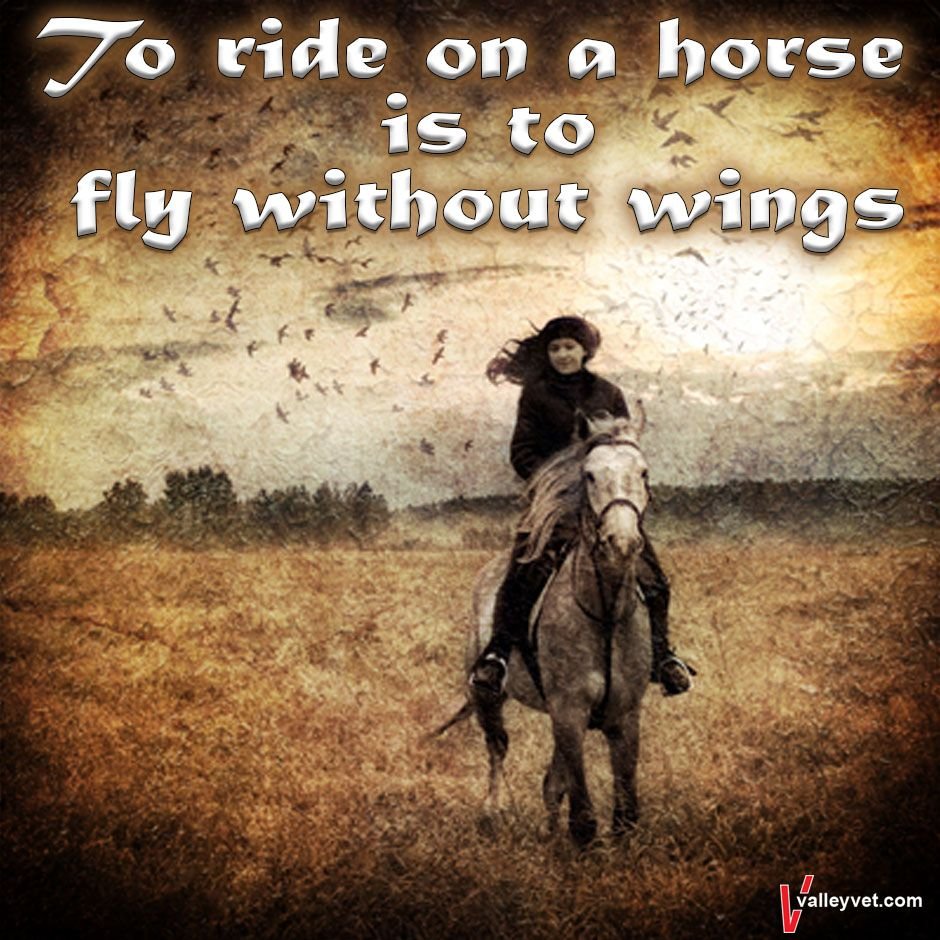 Pin by Valley Vet Supply on Horse Sayings | Horse supplies