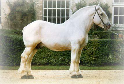 Rare Horse Breeds Rare Breeds of Draft Horse