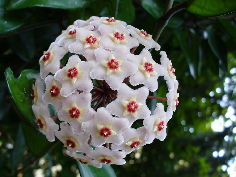 Las 15 Flores Más Exóticas Del Mundo Bioguia Flor De Nacar Flores Exóticas Flores Raras