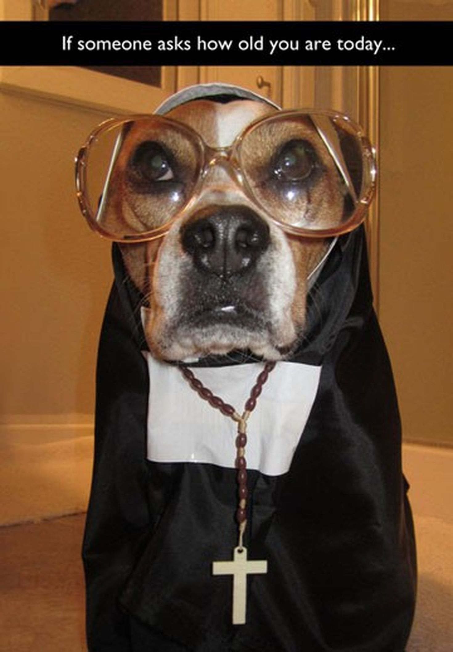 Dog In A Nun Costume With Images Dressed Up Dogs Funny Friend