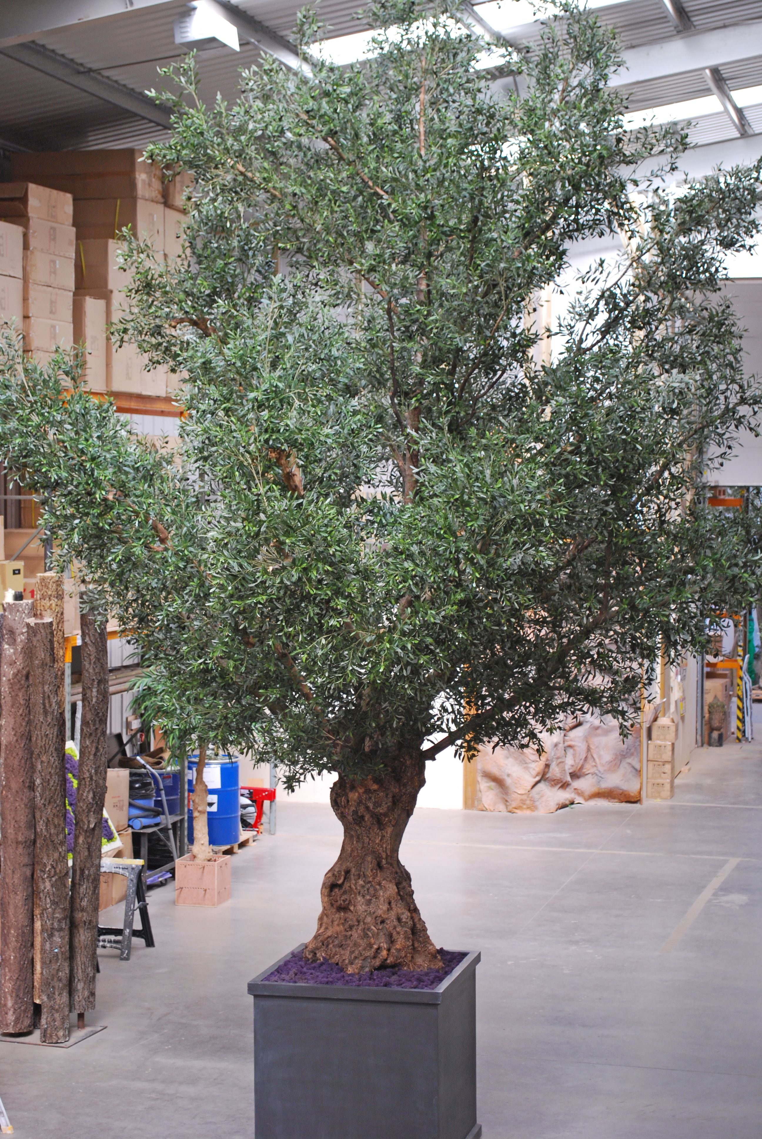 Large Artificial Olive Tree Ideal For Hotels Ping Centres And Offices Hotel Artificialolivetree Largeartificialtree Artificialolive Mall