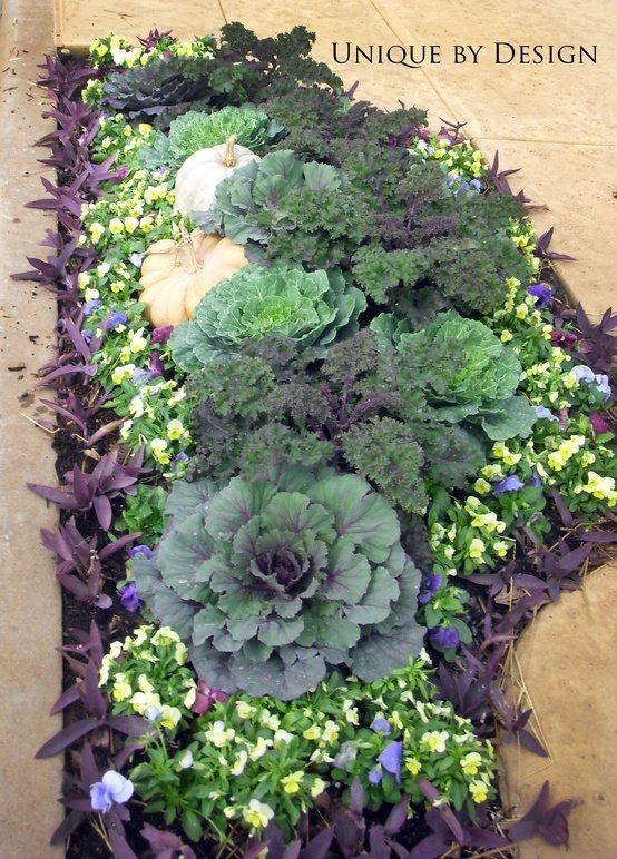 Tradescantia, pansies, cabbage, kale