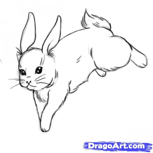 Step learn how to draw rabbits free step by step online drawing tutorials farm animals animals free step by step drawing tutorial will teach you in