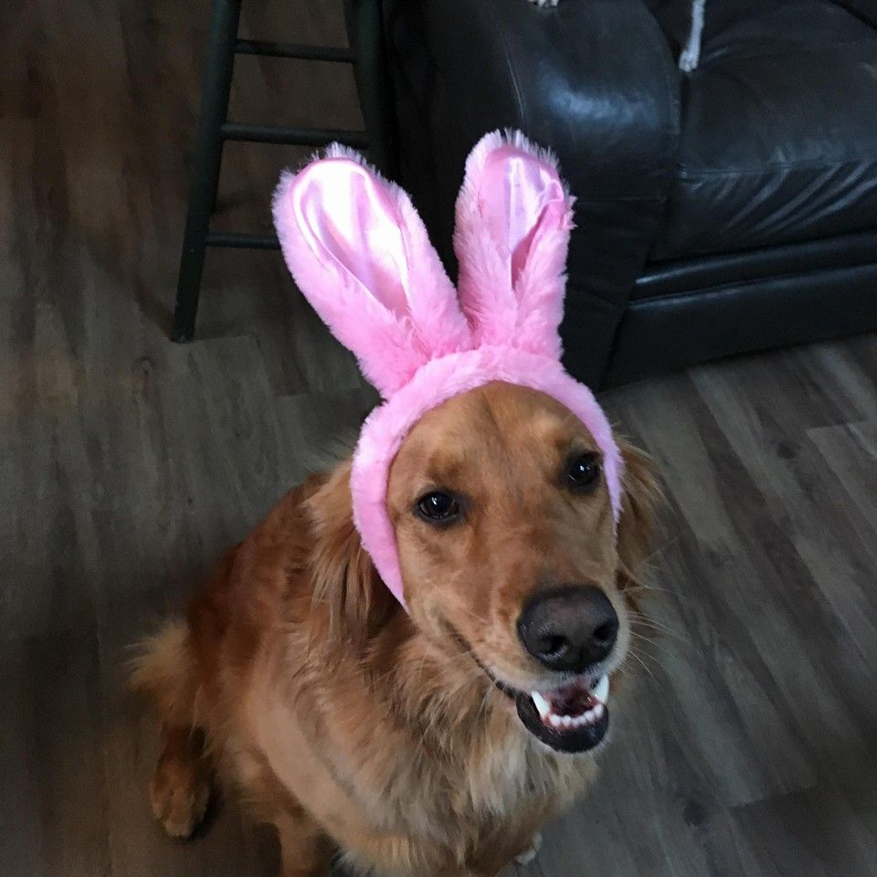 Happy Easter http://www.totallygoldens.com/