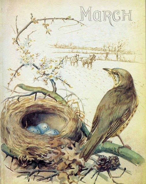 ❥ Welcome, March! Artwork by Edith Holden from Country Diary of an Edwardian Lady~ BelleWest.com