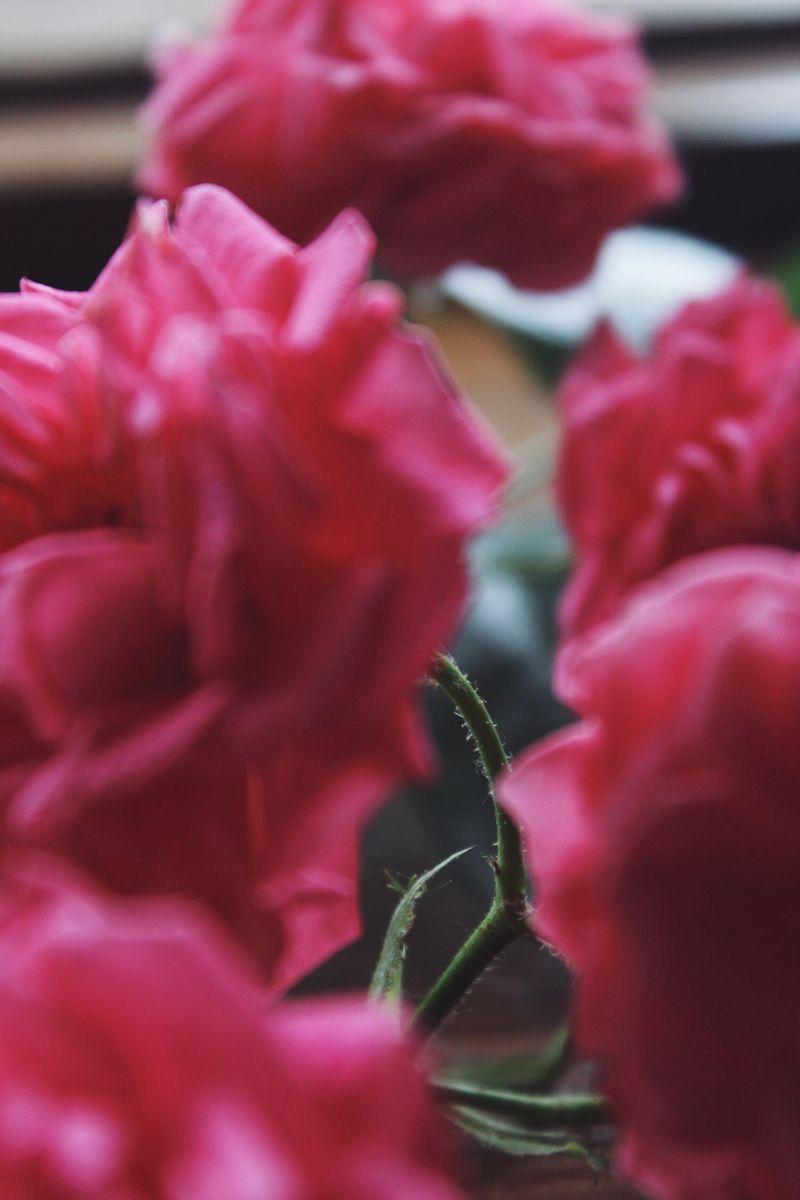 #wallpapers #vsco #rose #flowerlove