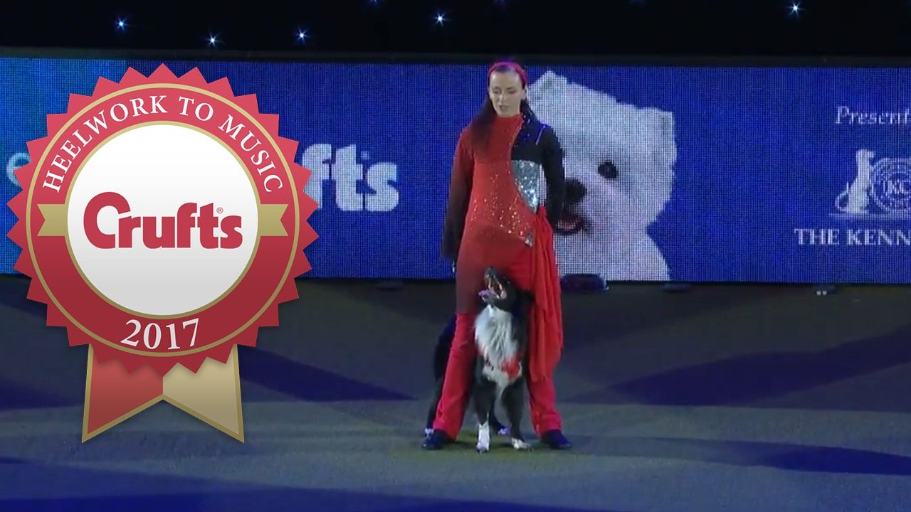 naturist family talent contest International Freestyle Heelwork To Music Competition Winner | Crufts 2017