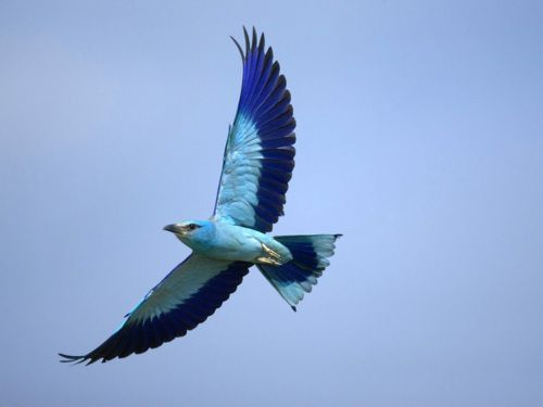 Whether A Bird Flies High Or A Bird Flies Low It Is Always A Bird Birds Flying Flying Birds Images Birds