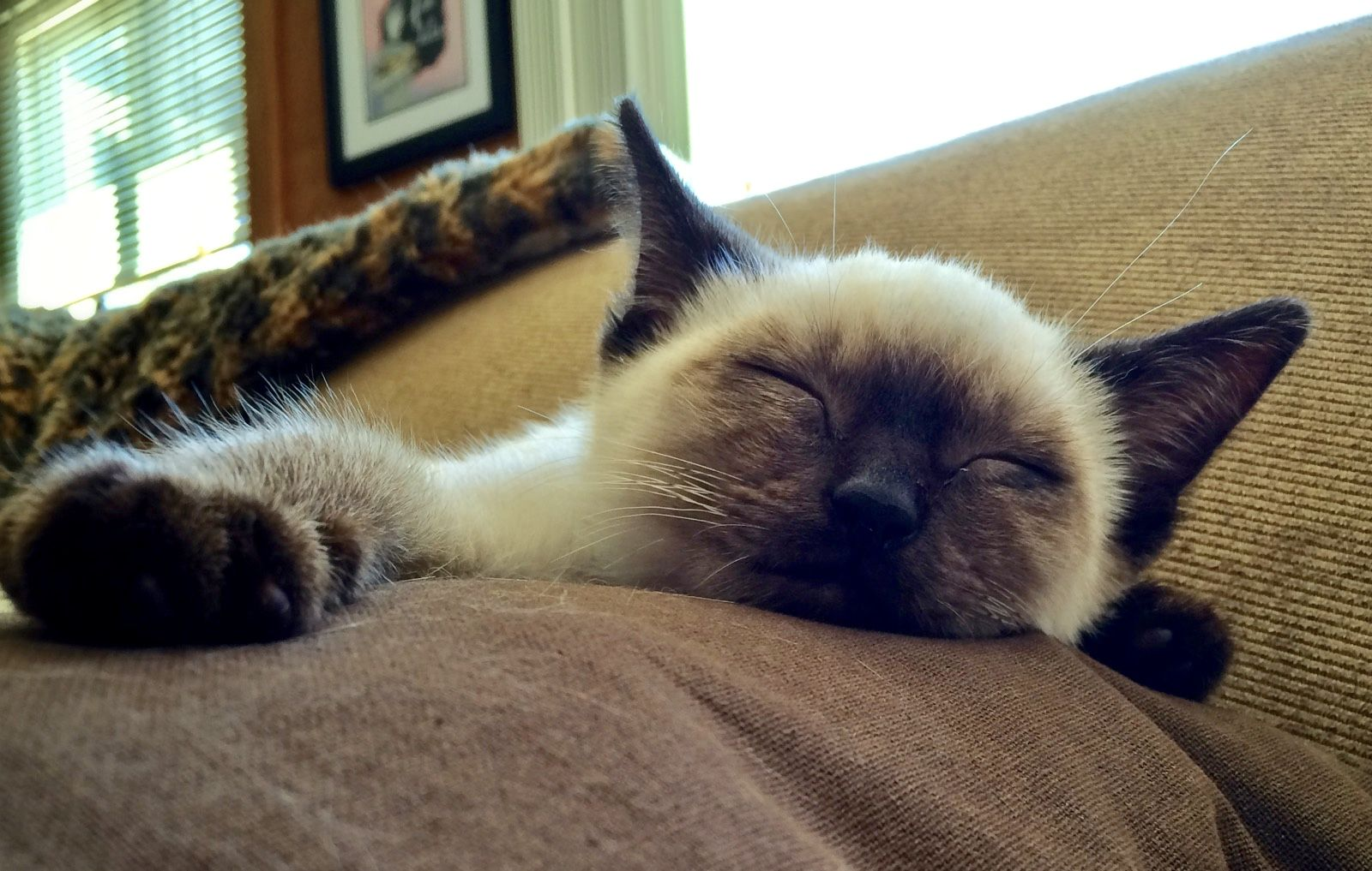11 Tips to Keep Your Indoor Cat Happy (With images