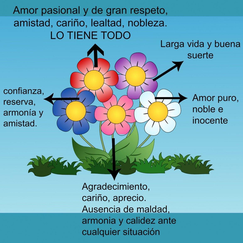 Significado colores en las flores ramos de flores - Significado de los colores de las rosas ...