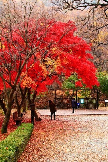계룡산 Korea
