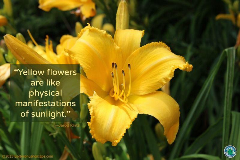 Flowering wisdom gardens and flowers flowering wisdom gardening quotes eagleson landscape co mightylinksfo
