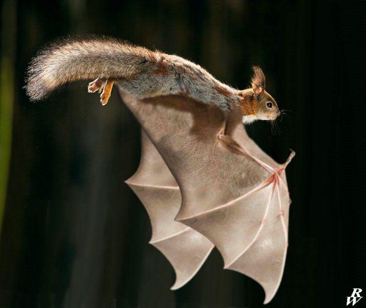 Flying Squirrel Pet Fly Flying Squirrel Flying Squirrel Pet Cute Animals
