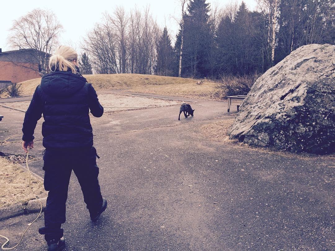 #swdi #policek9 #policedog #polishund #instadog #instagramdogs #dogtraining #spårhund #holländskherdehund #dutchshepherd #workingdog #workingk9 #instadog #instagramdogs by swdiab