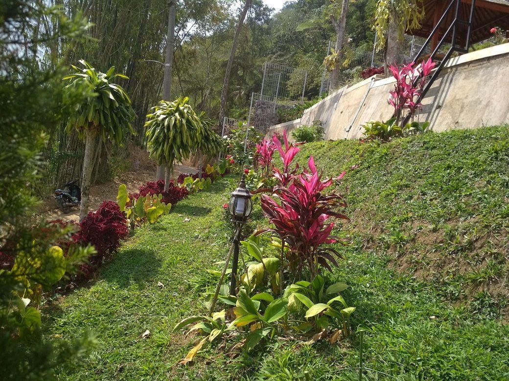 Tanam Rumput Taman Vertikal Tanaman Menanam