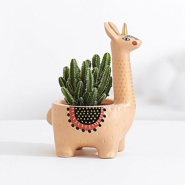 Lamacorn-Kaktuspflanze #cactusplant