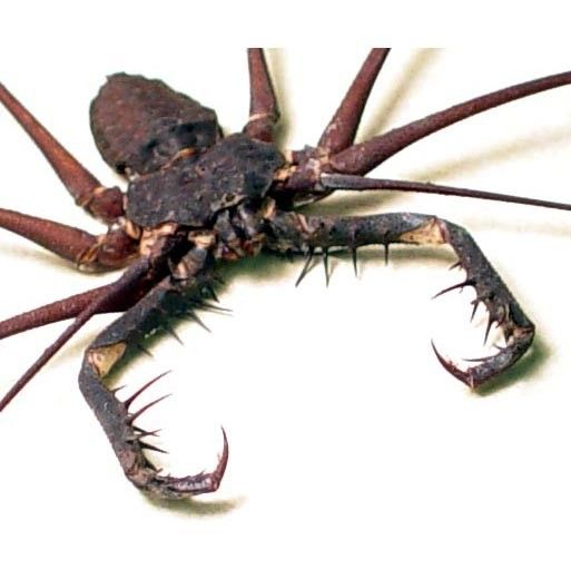 Pin By 1st Response On The Worst Bugs In The World Spider Weird