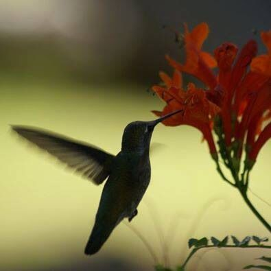 Posted by my friend Lorill. Love hummingbirds!