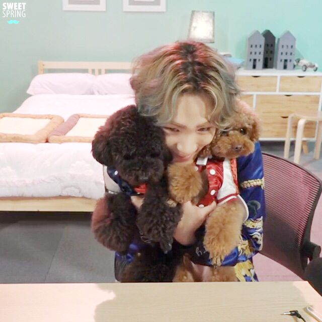 KEY and puppies :) ahhhh so fluffyyyyyy