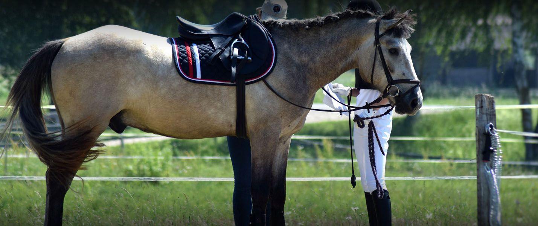 Pin by fourways equine clinic on httpsfourwaysequineco