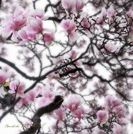 30 imagens fantásticas da natureza [Fotografia] | marcustrotta.com