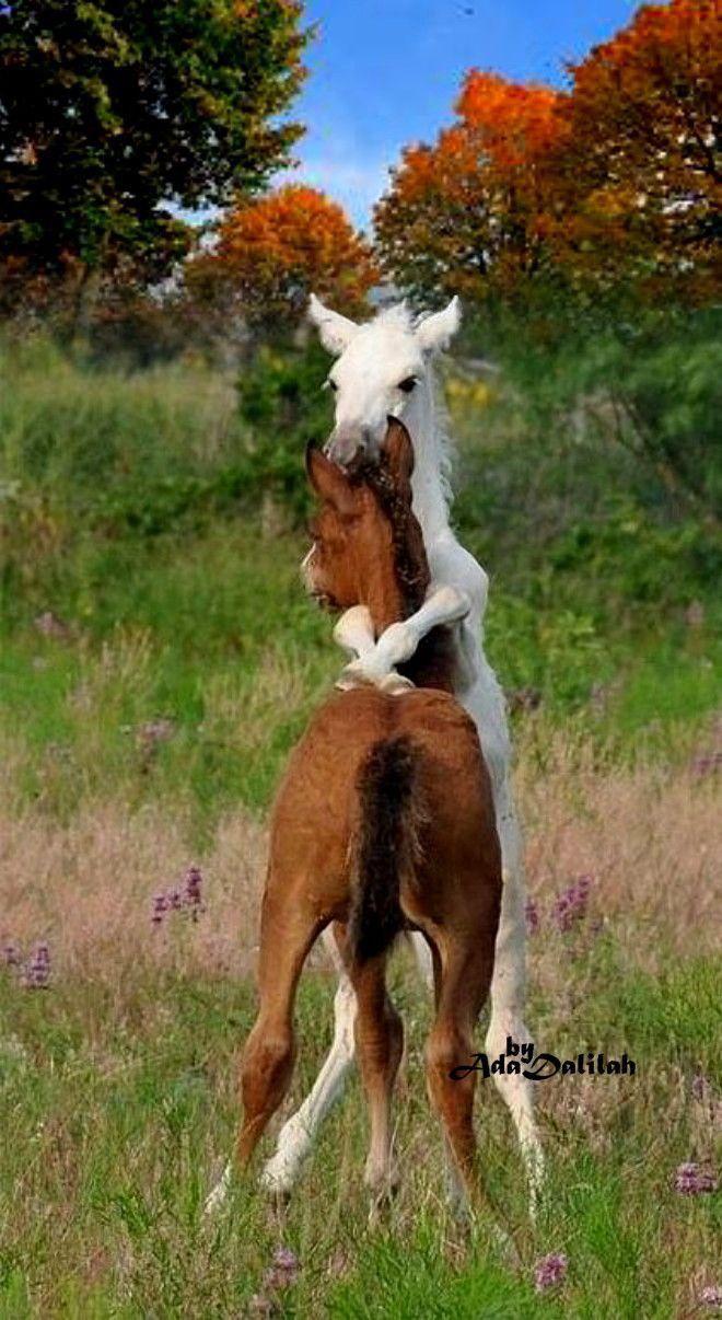Junge Füllen.... es ist schön wenn Pferde viel in der Natur leben eine Offenstallhaltung ist kein Problem für jede Pferderasse. #animalesbebébonitos